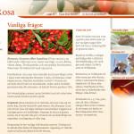 web-design-artrosa-site-05